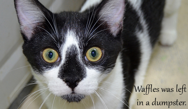 Waffles was left in a dumpster as a kitten.